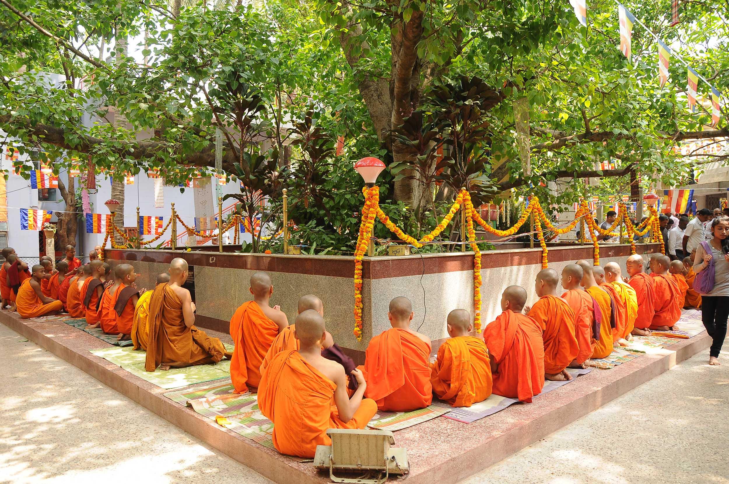 vesakha-buddha-jayanti-mahabodhi-2015 (7)